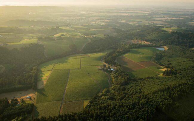 Aerial view of Knudsen Vineyard